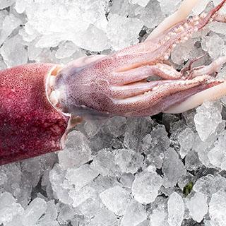 פירות ים קפואים