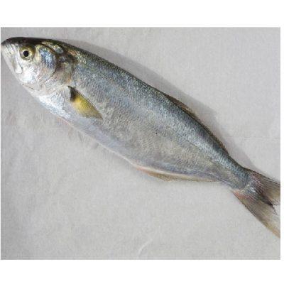 דג טרי