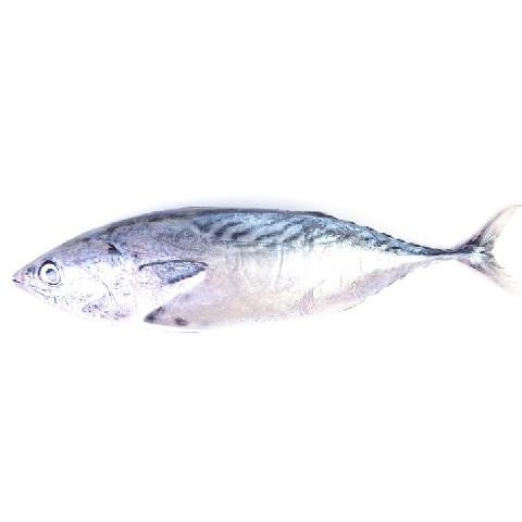 דג שלם