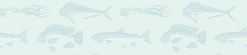 fish-bg